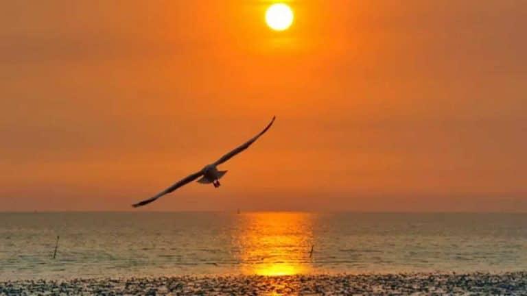 oiseau volant au-dessus de la plage